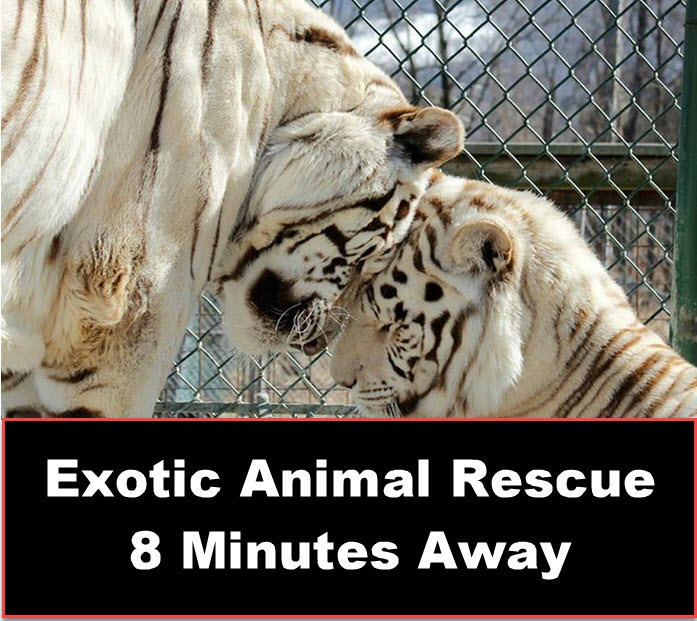 Exotic animal Rescue Down The Street 2